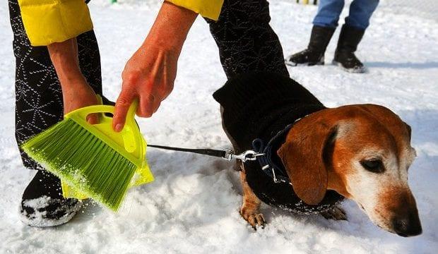 Убрать за собакой