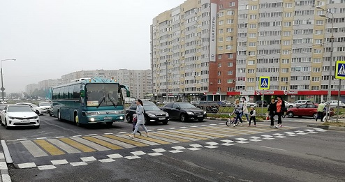 Зебра в Обнинске