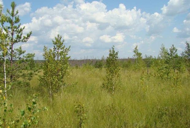 малое игнатовское болото