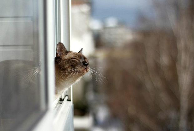 Кот учуял весну