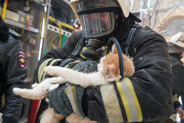 Кота спасает пожарный