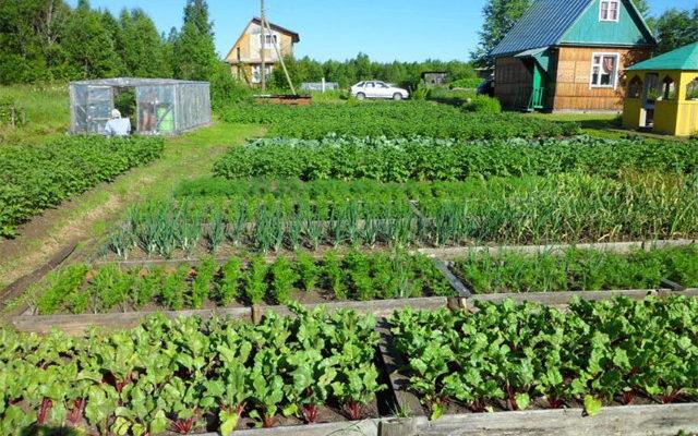 Растения на огороде