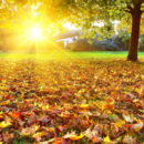 Погода осень