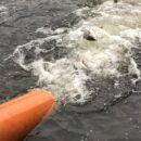 Рыба запуск