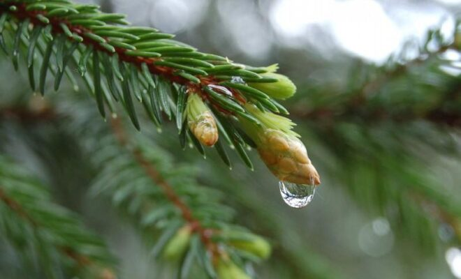 Елка под дождем
