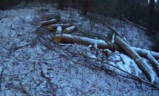вырубили лес