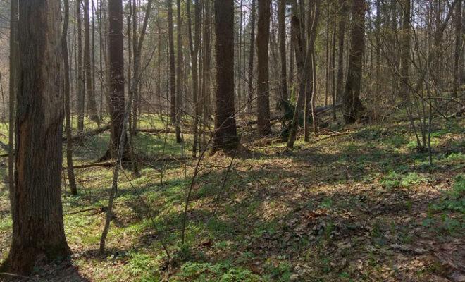 засечный лес