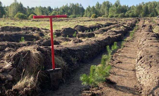 лесовосстановление правительство
