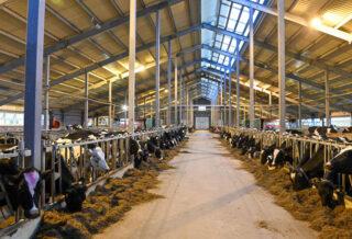 молочное животноводство