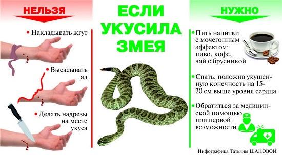 За день два человека обратились в больницу Калуги с укусами змей
