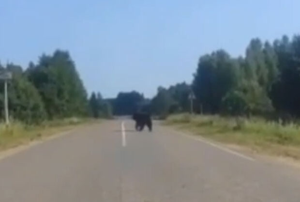 медведь Калуга