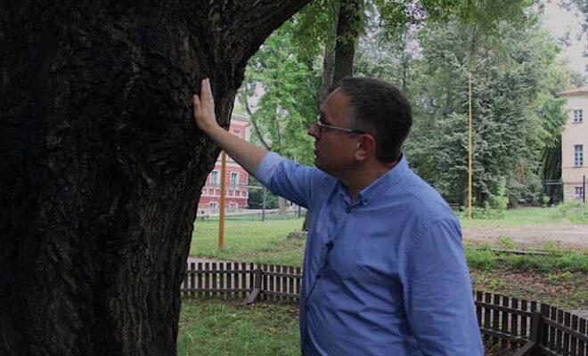 древний дуб