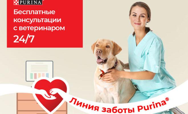 консультации ветеринар