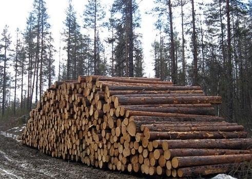 лес бревна