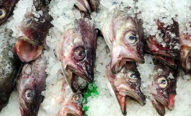 рыба в глазури