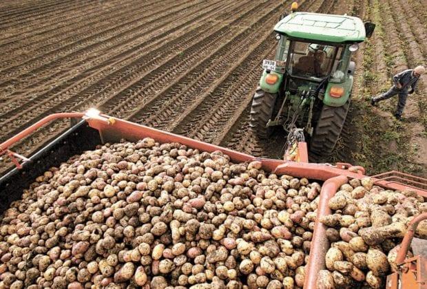 уборка картофеля