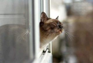 кот ждет весны