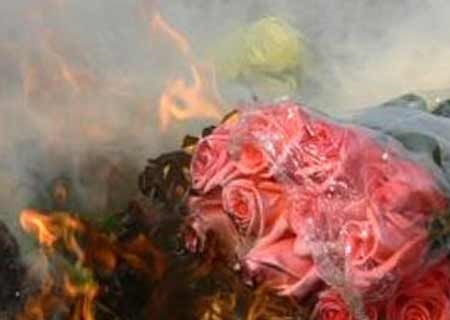 Розы горят