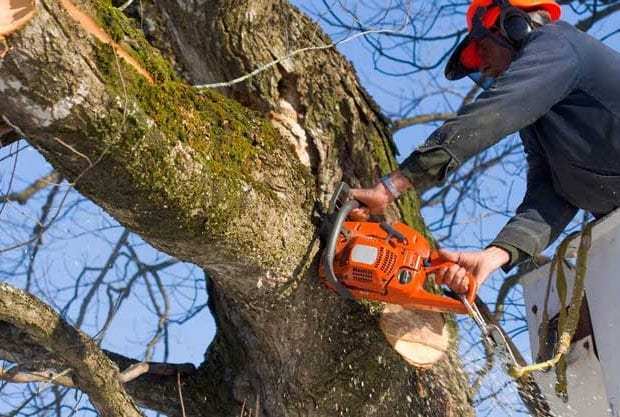 Как доказать спил деревьев