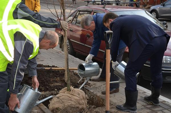 Сажают деревья Артамонов и Разумовский