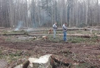 Рубка леса ОНФ
