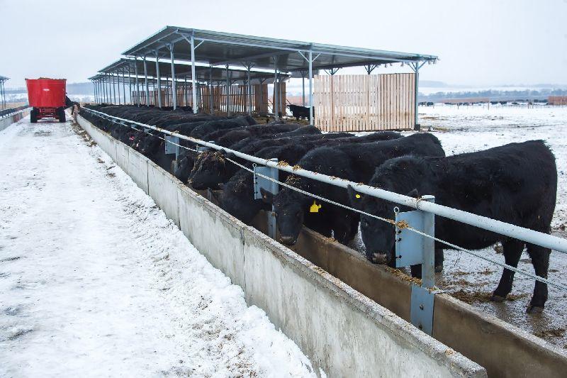 Калужский агробизнес будет специализироваться на мясном скотоводстве