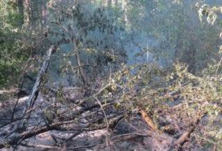 Пожар леса